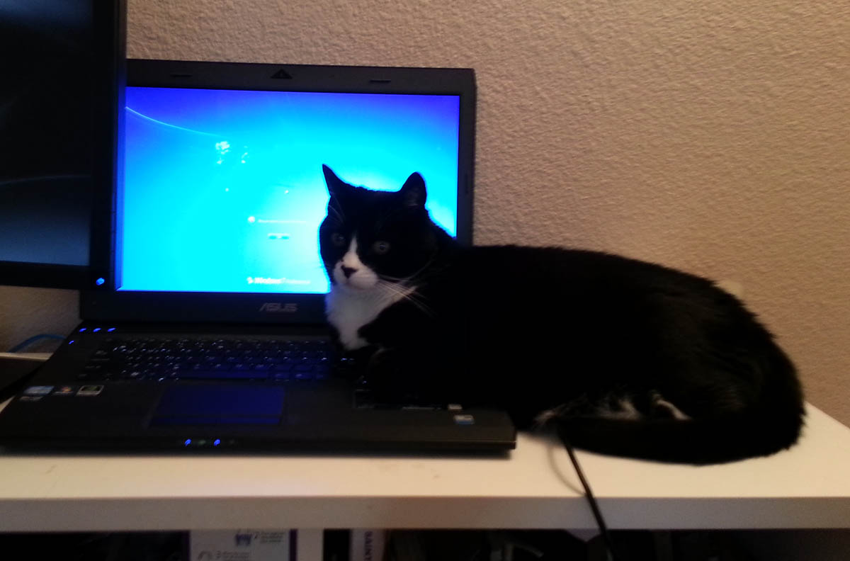 Telecommuting Cat