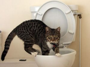 Cat-On-Toilet.jpg