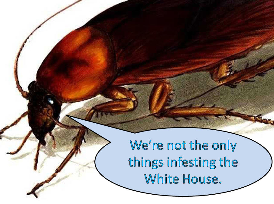 Bugged: Obama's Roach Problem | Bloviating Zeppelin