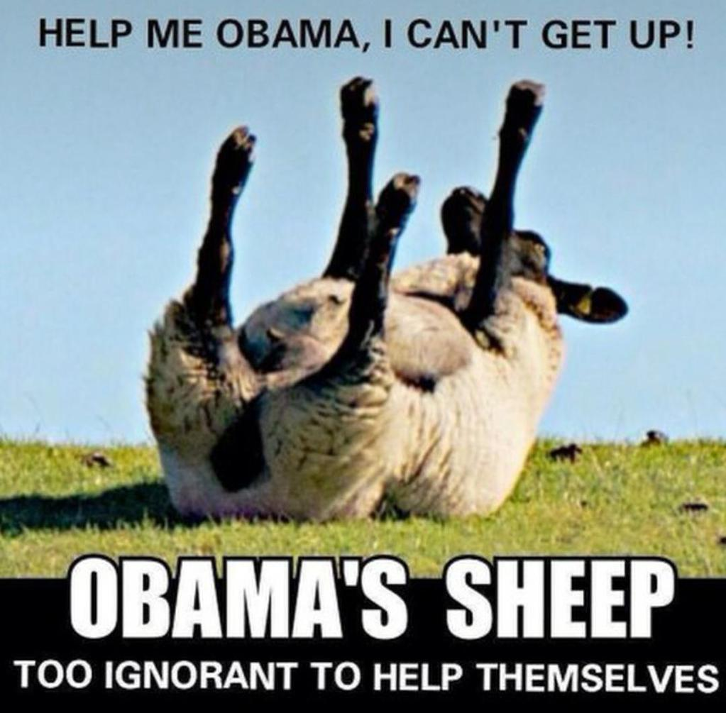 Image result for obama sheep