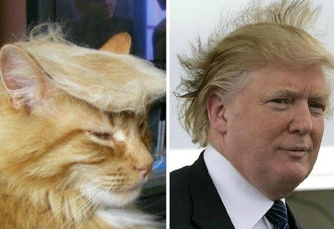 trump-cat-trump